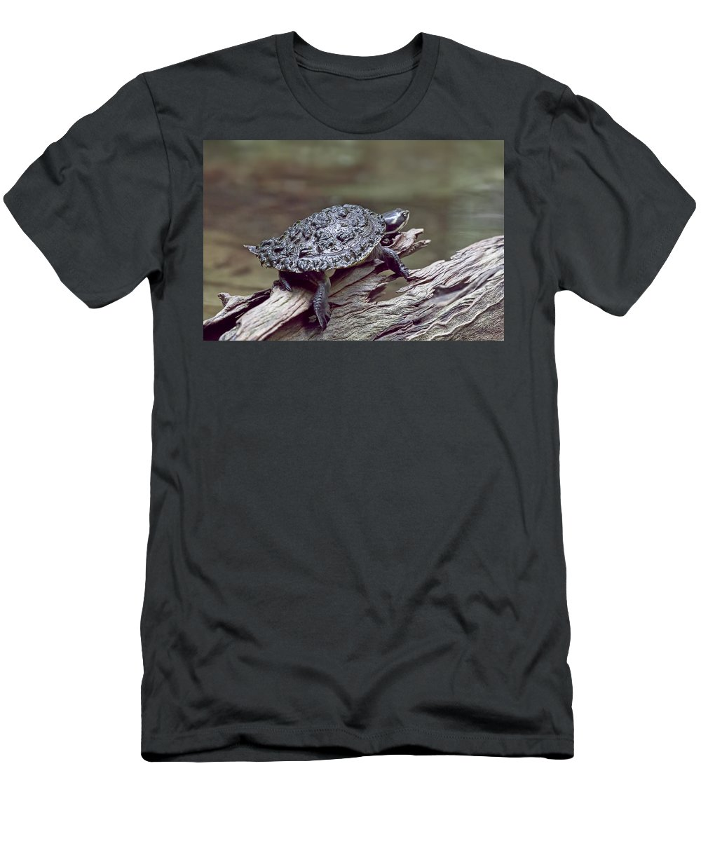 Water Turtle Men's T-Shirt (Athletic Fit) featuring the photograph Water Turtle by Douglas Barnard