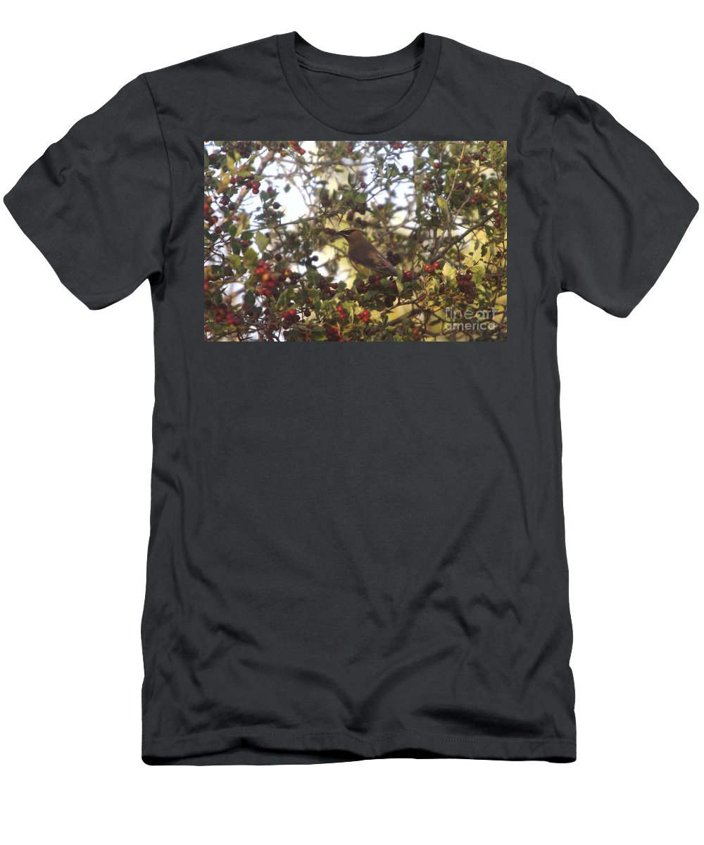 Birds Men's T-Shirt (Athletic Fit) featuring the photograph Wax Wing In A Berry Tree by Jeff Swan