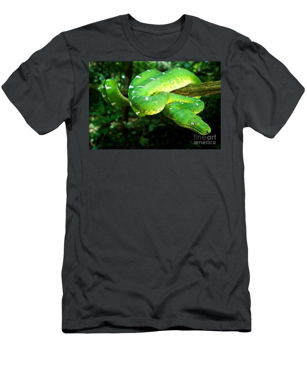 Amazon Basin Emerald Tree Boa Men's T-Shirt (Athletic Fit) featuring the photograph West Amazonian Emerald Tree Boa by Dant� Fenolio
