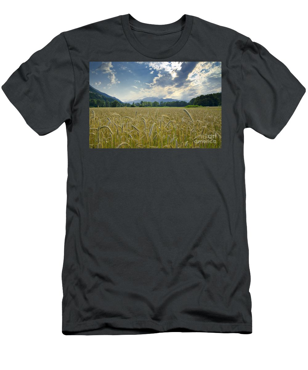 White Men's T-Shirt (Athletic Fit) featuring the photograph Wheat Field by Mats Silvan
