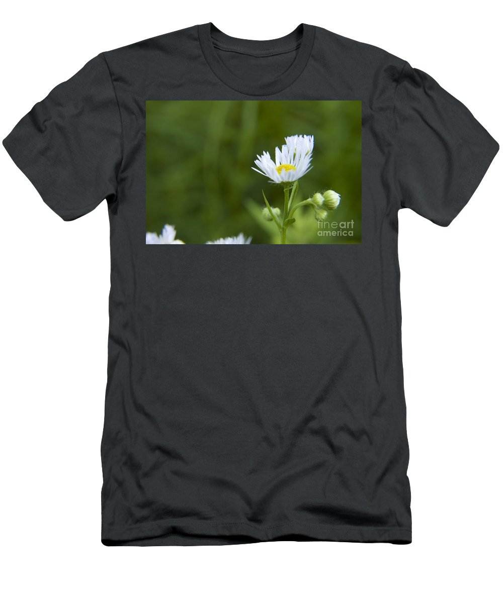 Wildflower Men's T-Shirt (Athletic Fit) featuring the photograph White Aster Wildflower by Darleen Stry