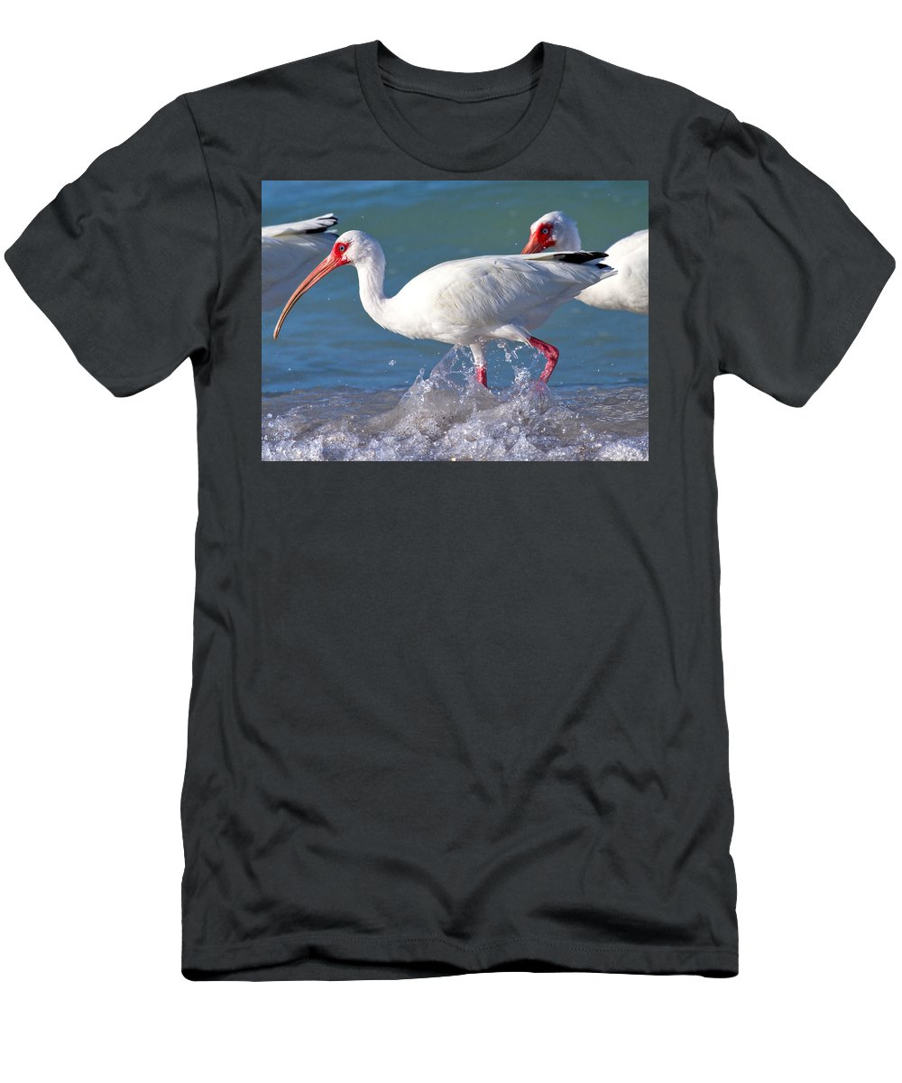 Coquina Men's T-Shirt (Athletic Fit) featuring the photograph White Ibis On The Shore by Betsy Knapp