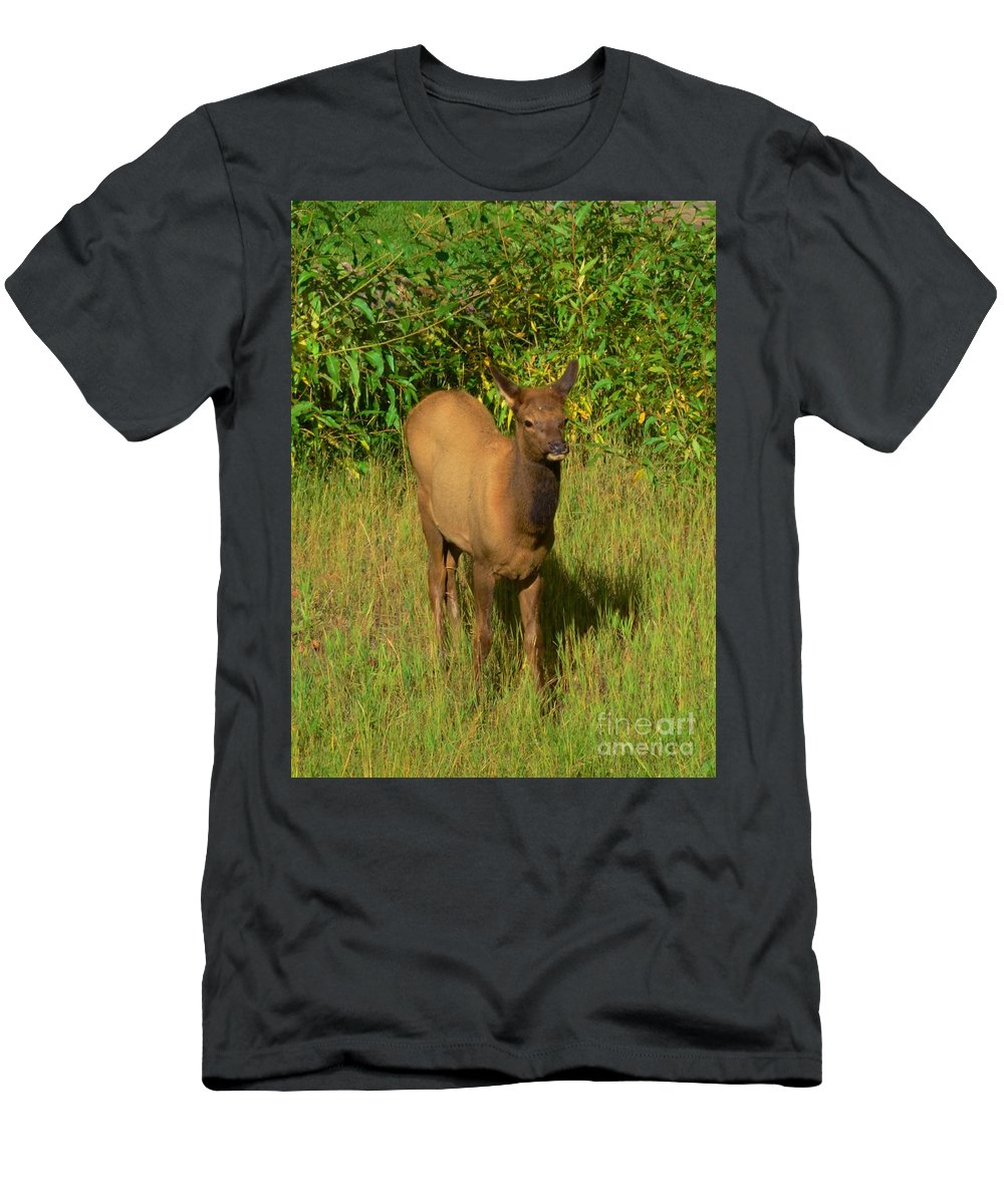 Young Men's T-Shirt (Athletic Fit) featuring the photograph Young Elk by Kathleen Struckle