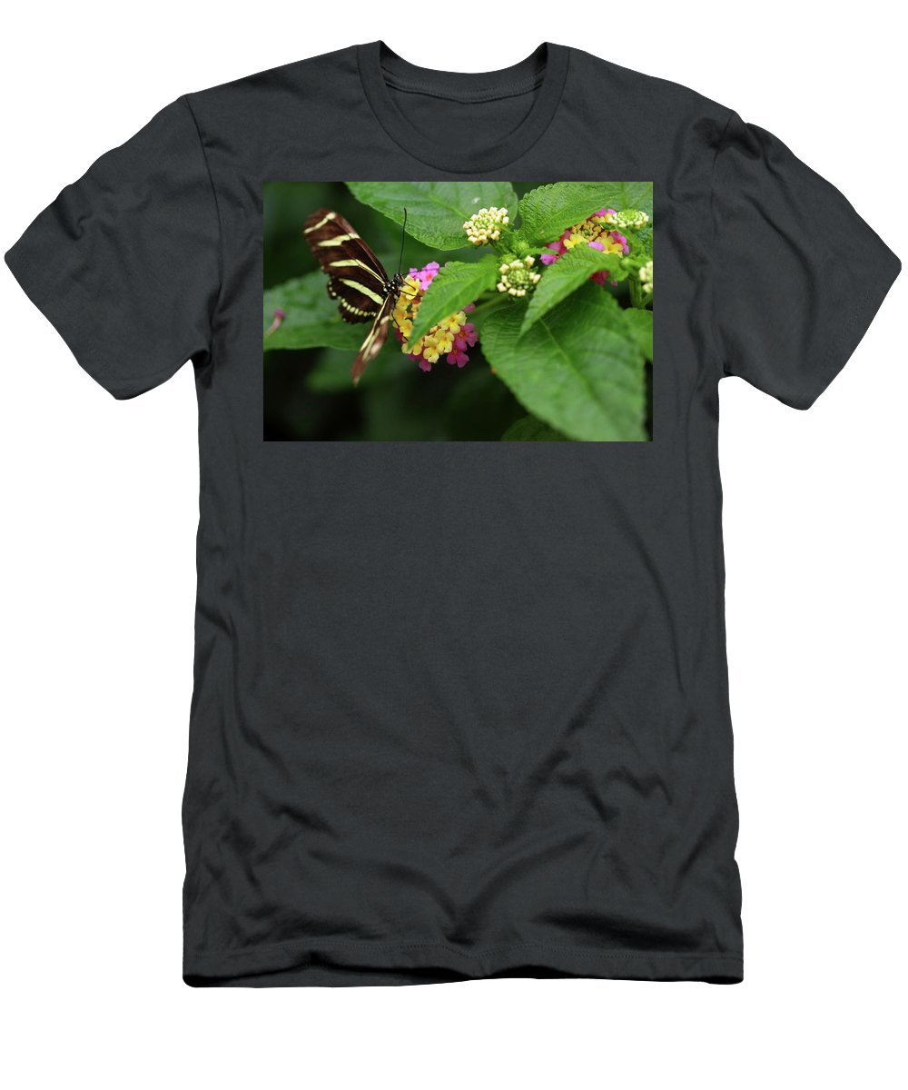 Butterfly Men's T-Shirt (Athletic Fit) featuring the photograph Zebra Longwing by Rick Berk