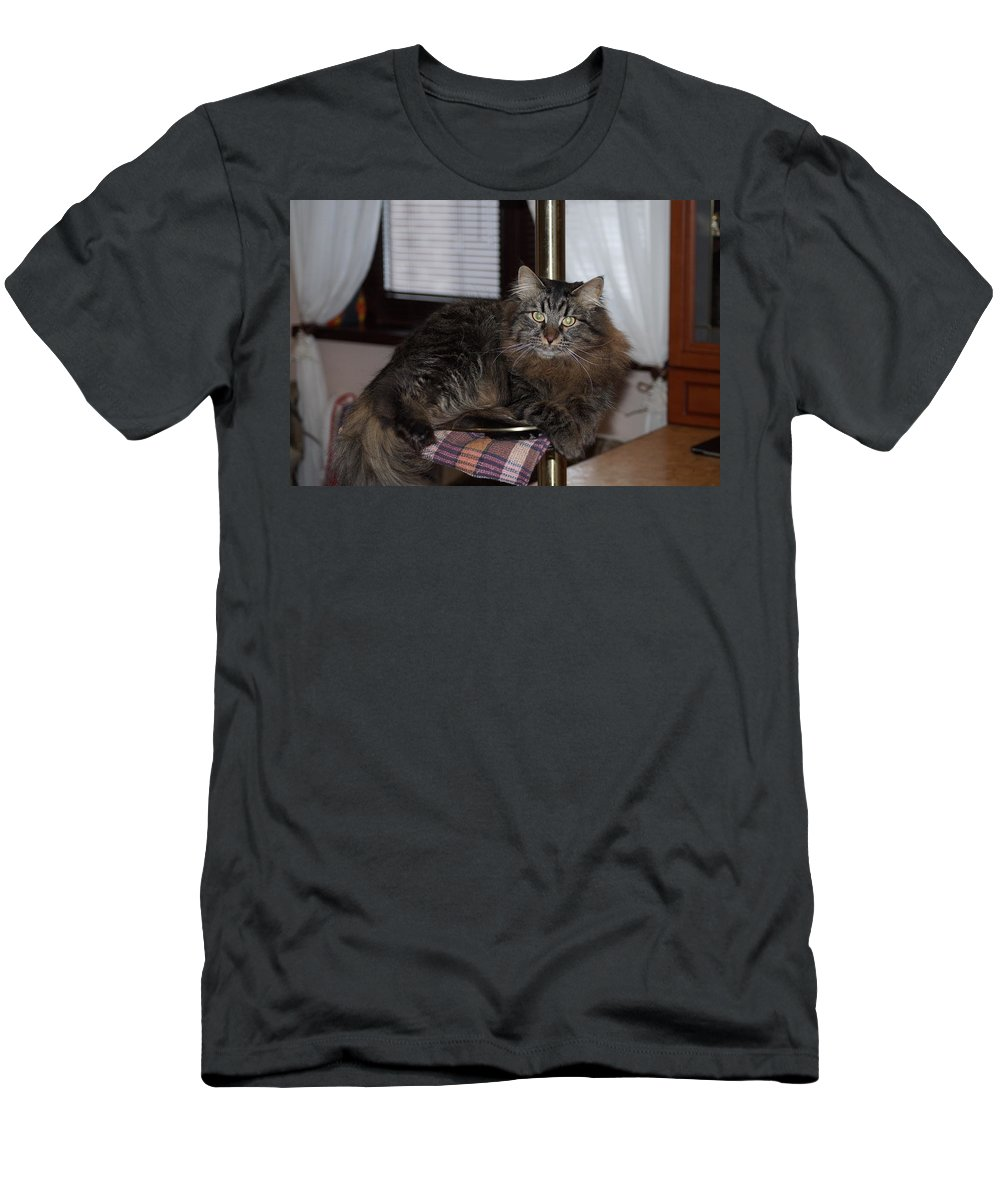 Cat Men's T-Shirt (Athletic Fit) featuring the photograph Cat On The Bar by Nina Barsukova