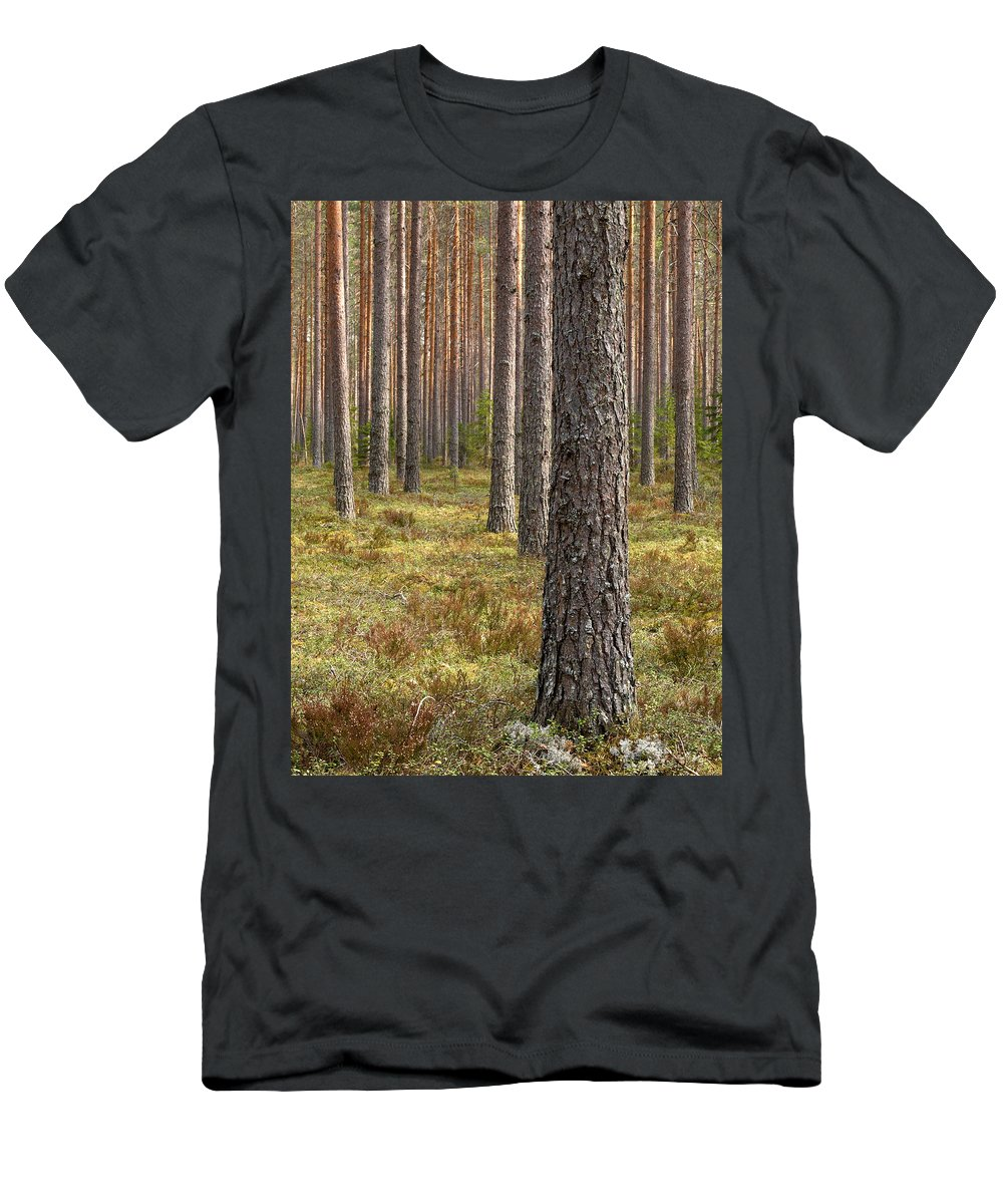 Lehtokukka Men's T-Shirt (Athletic Fit) featuring the photograph Pine Forest by Jouko Lehto