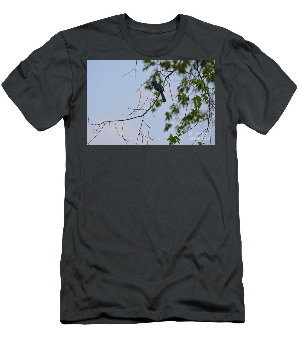 Blue Jay In Tree Prints Men's T-Shirt (Athletic Fit) featuring the photograph Blue Jay In Tree by Ruth Housley