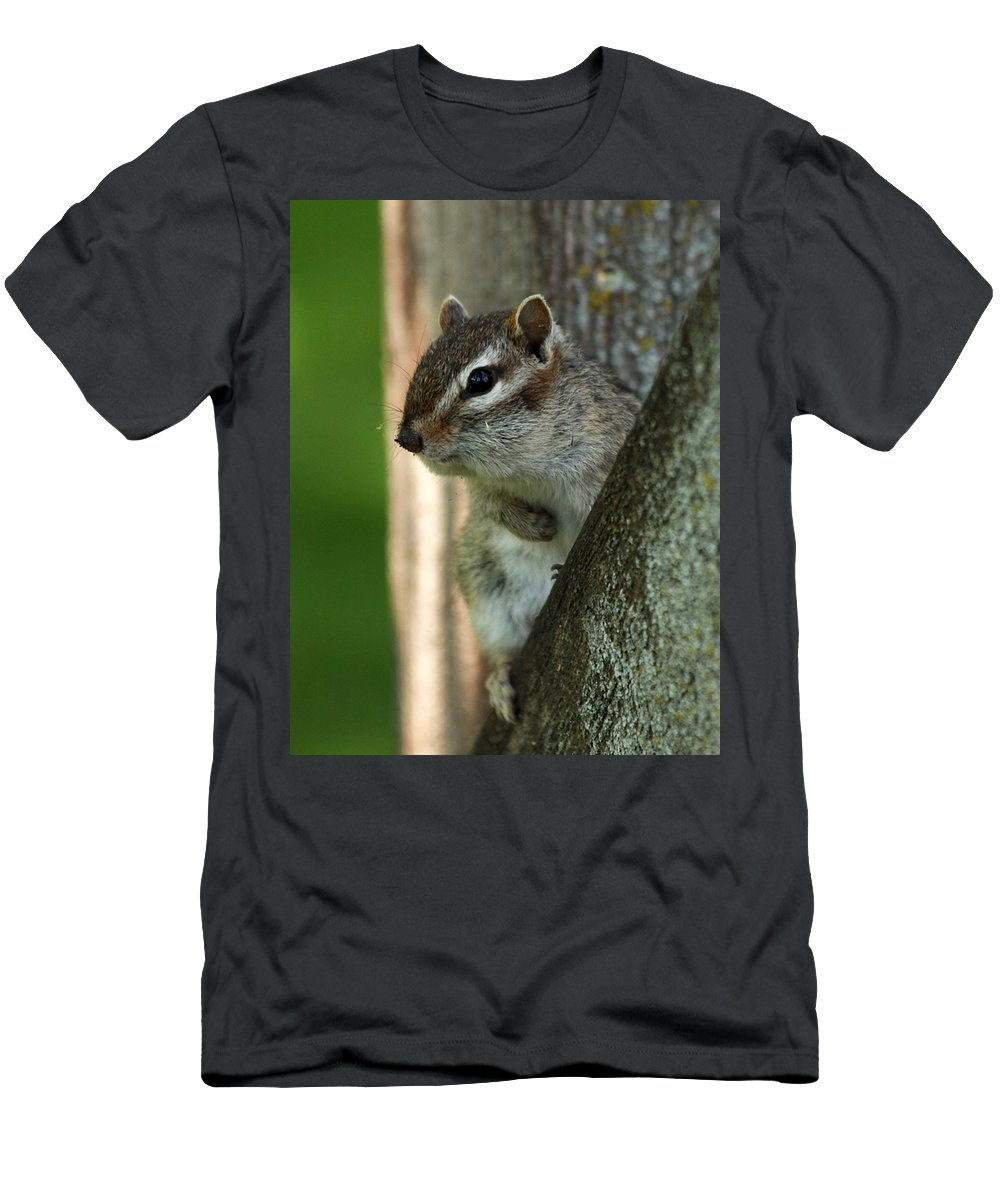 Chipmunk Men's T-Shirt (Athletic Fit) featuring the photograph Chipmunk by Lori Tordsen