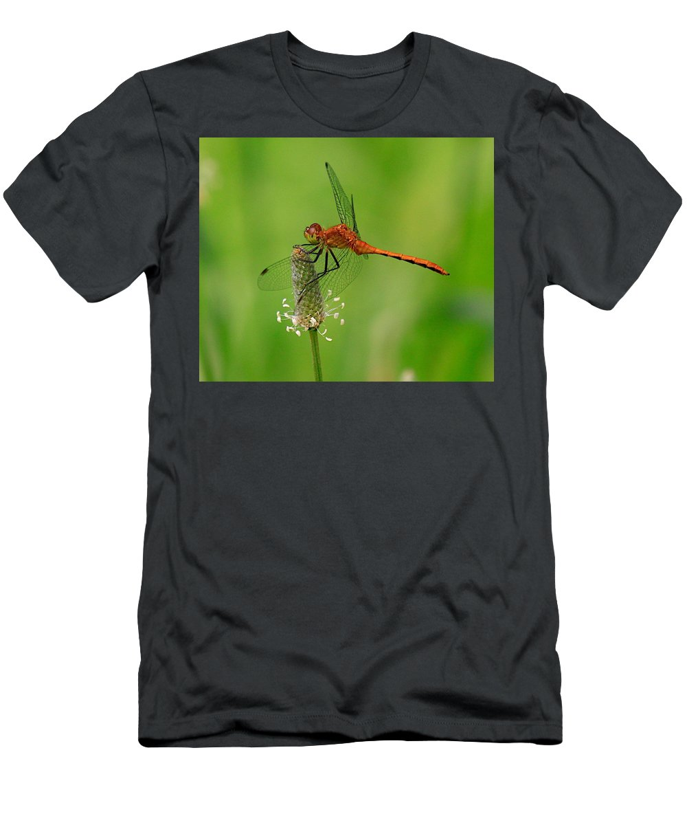 Related Tags: Men's T-Shirt (Athletic Fit) featuring the photograph Dragon Fly by Robert Pearson