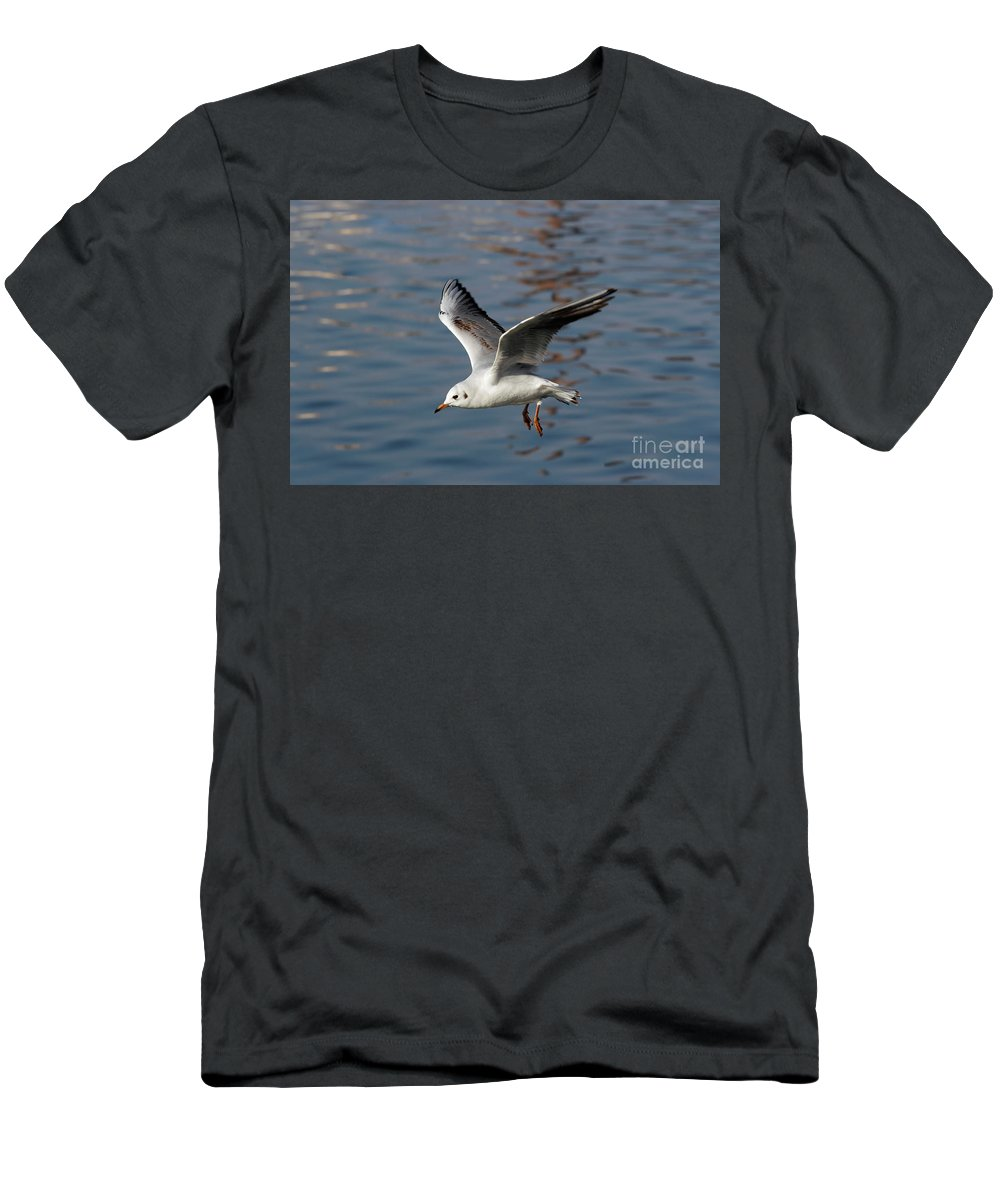 Animal Men's T-Shirt (Athletic Fit) featuring the photograph Flying Gull by Michal Boubin
