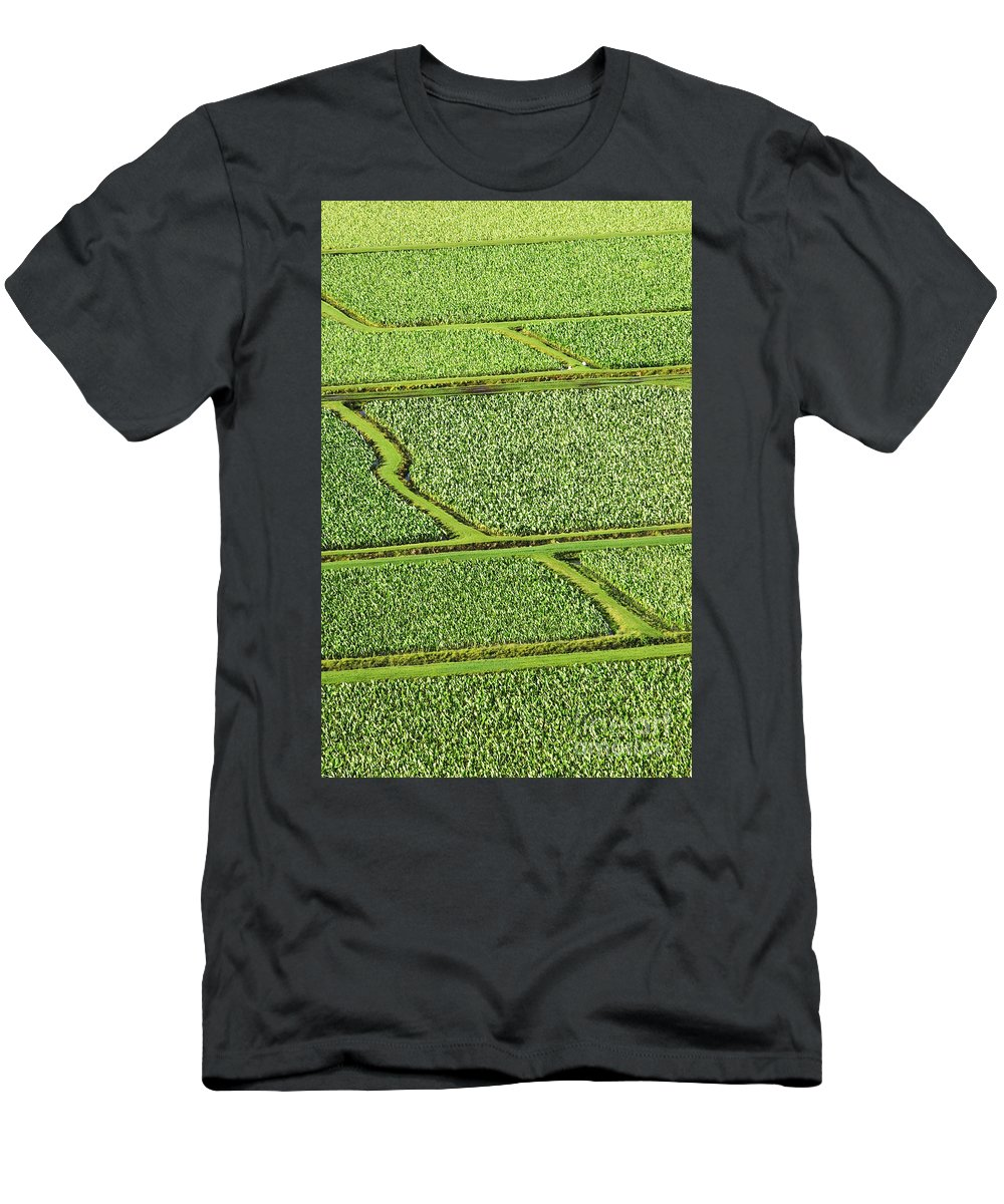 Afternoon Men's T-Shirt (Athletic Fit) featuring the photograph Hanalei Valley Taro Field by Greg Vaughn - Printscapes