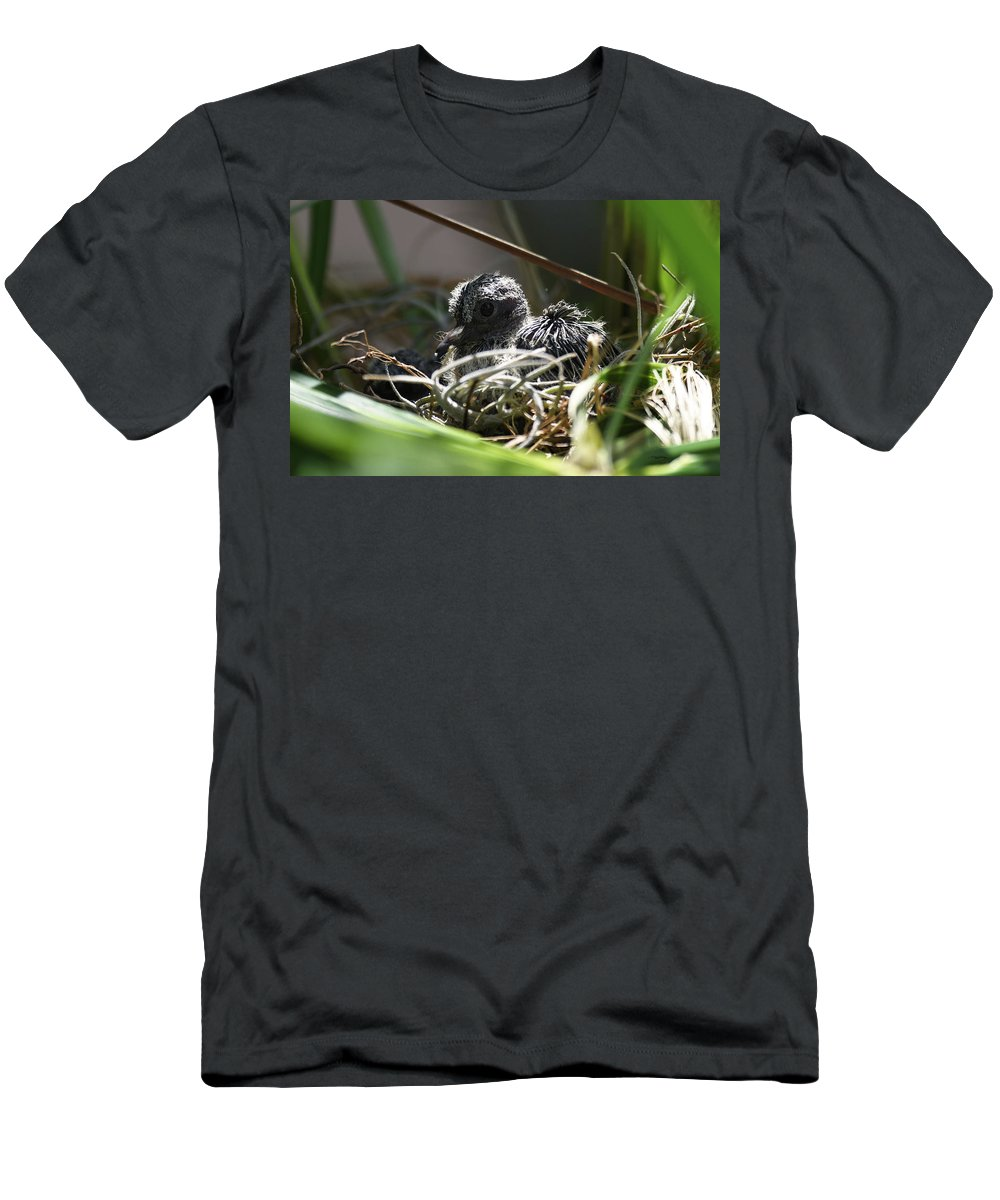 Mourning Dove Hatchling Men's T-Shirt (Athletic Fit) featuring the photograph Hello by Sally Sperry