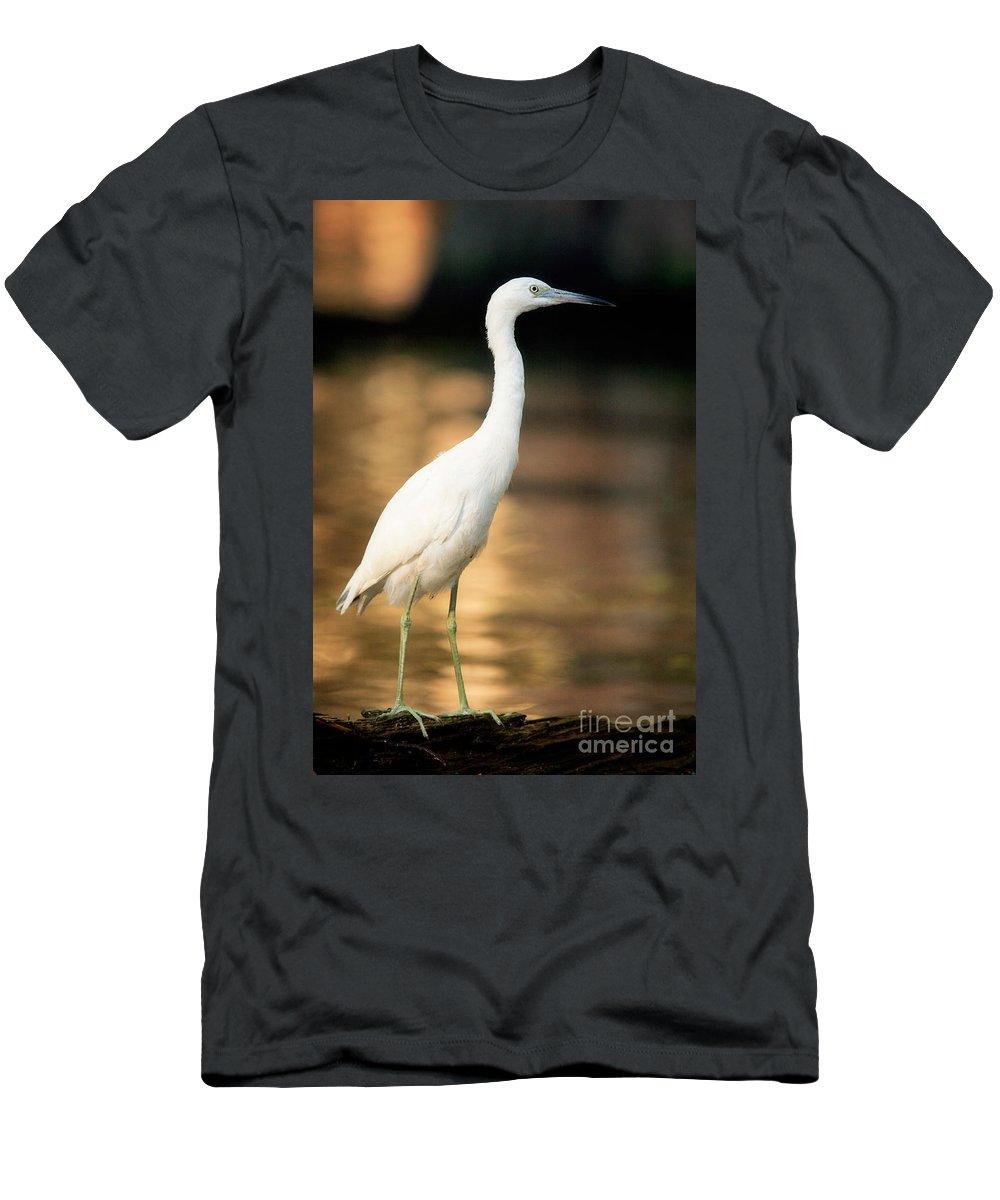 Immature Little Blue Heron Men's T-Shirt (Athletic Fit) featuring the photograph Immature Little Blue Heron by Matt Suess
