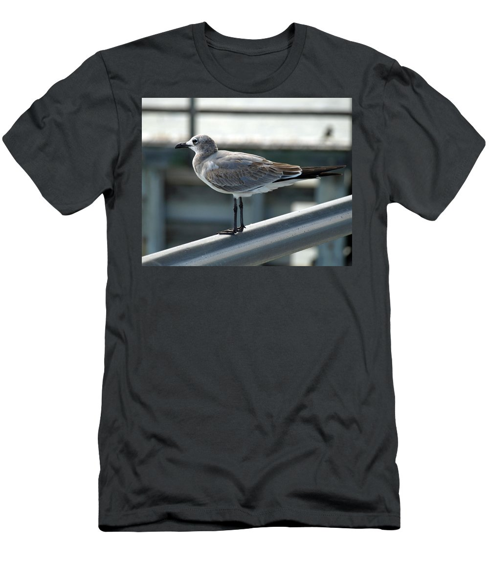 Laughing; Gull; Seagull; Bird; Waterfowl; Seashore; Sebastian; Inlet; Flying; Florida; Larus; Atrici Men's T-Shirt (Athletic Fit) featuring the photograph Laughing Gull by Allan Hughes