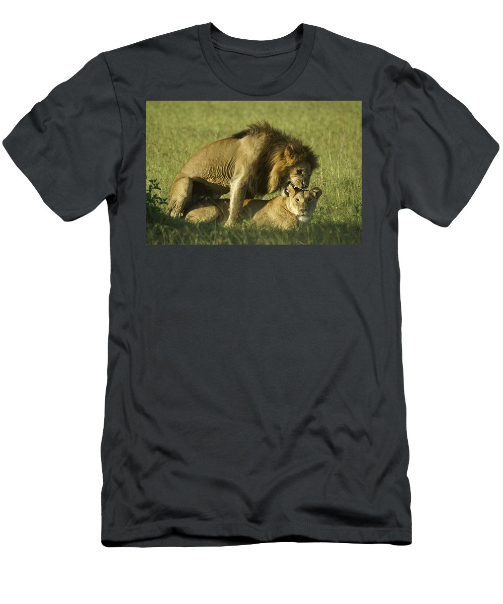 Africa T-Shirt featuring the photograph Love Bite by Michele Burgess