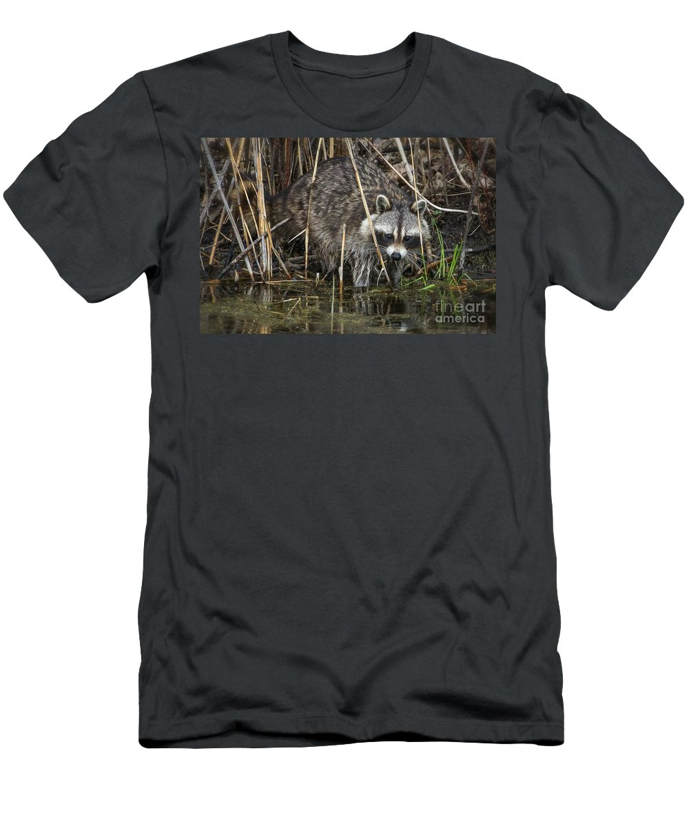 Raccoon Men's T-Shirt (Athletic Fit) featuring the photograph Raccoon Fishing by Susan Grube