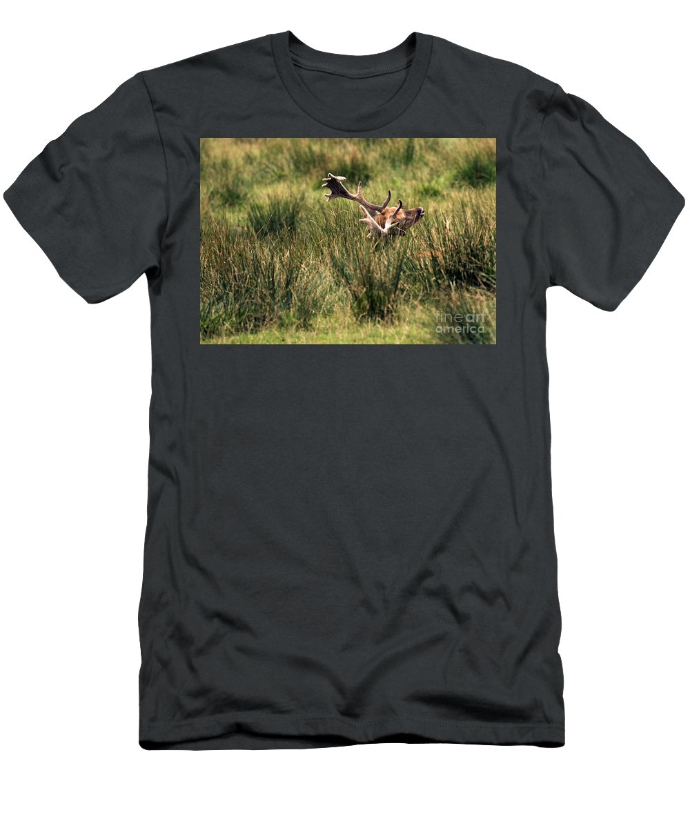 Fallow Deer Men's T-Shirt (Athletic Fit) featuring the photograph Siesta by Angel Ciesniarska