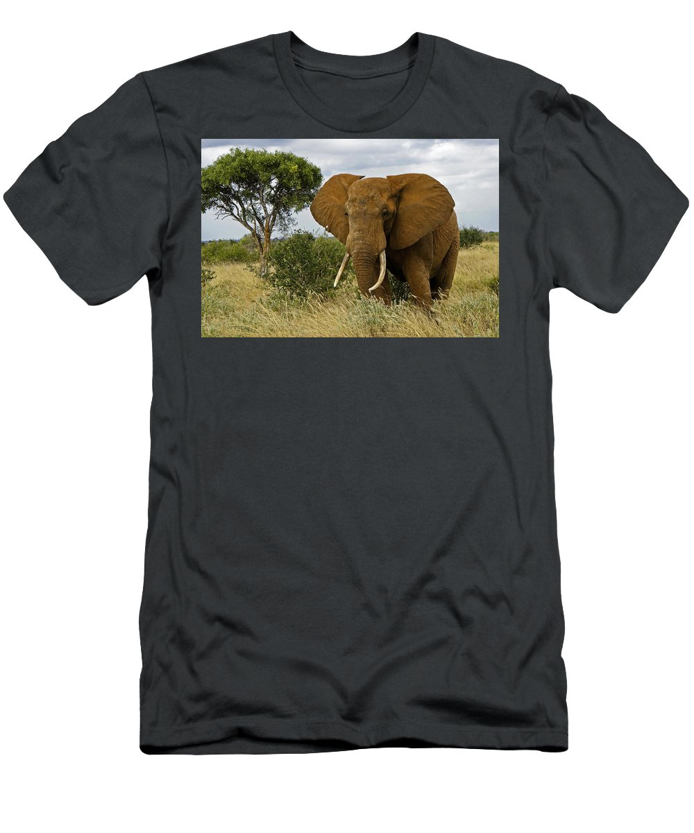 Africa Men's T-Shirt (Athletic Fit) featuring the photograph The Old Bull by Michele Burgess