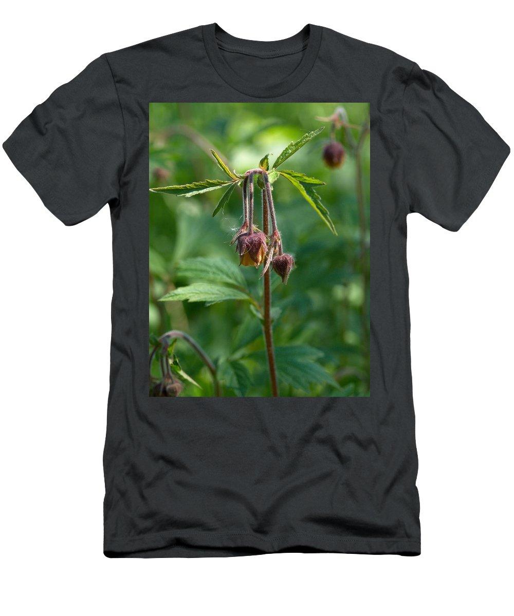 Lehtokukka Men's T-Shirt (Athletic Fit) featuring the photograph Water Avens by Jouko Lehto