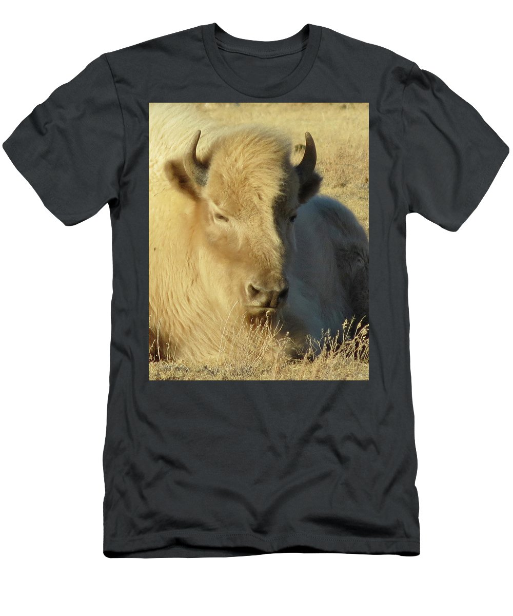 Buffalo Men's T-Shirt (Athletic Fit) featuring the photograph White Buffalo by Darlene Grubbs