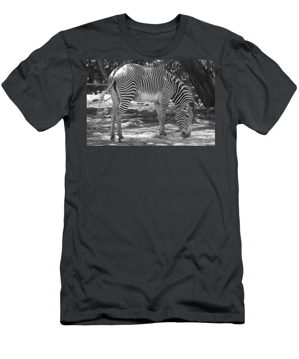 Animal Men's T-Shirt (Athletic Fit) featuring the photograph Zebra In Black And White by Rob Hans