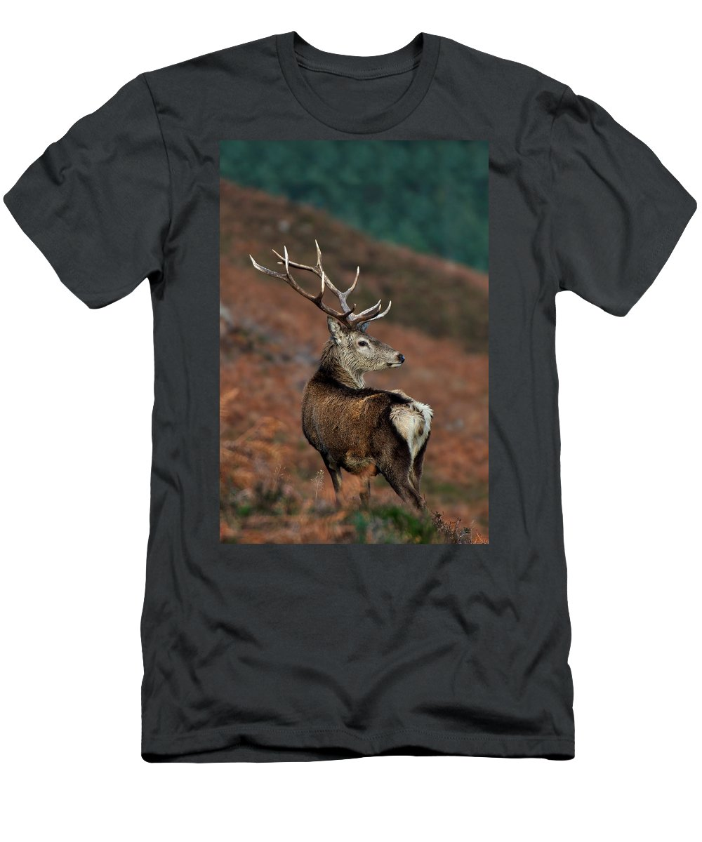 Red Deer Stag Men's T-Shirt (Athletic Fit) featuring the photograph Red Deer Stag by Gavin Macrae