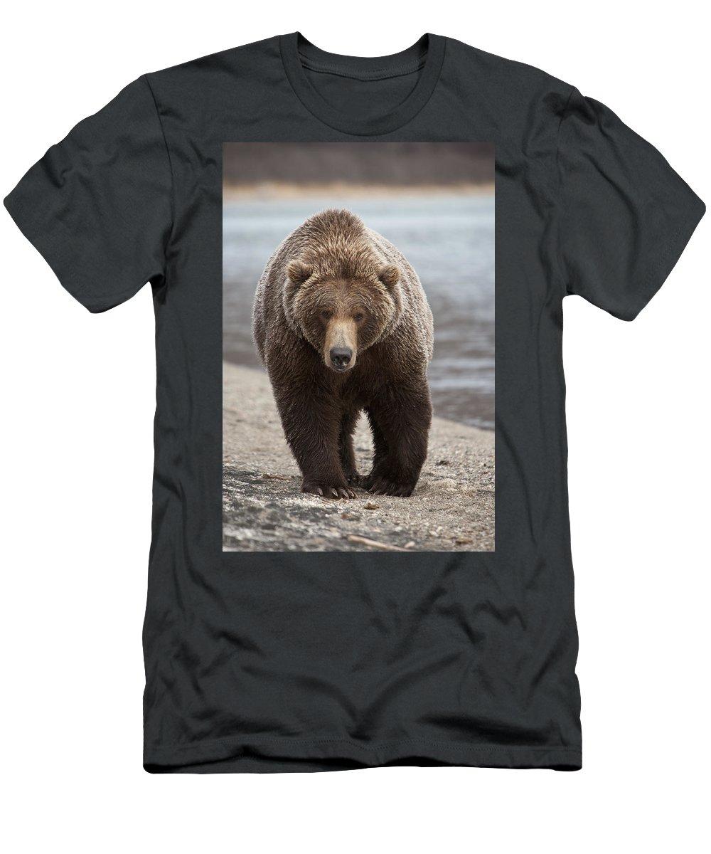 Mp T-Shirt featuring the photograph Grizzly Bear Ursus Arctos Horribilis by Matthias Breiter