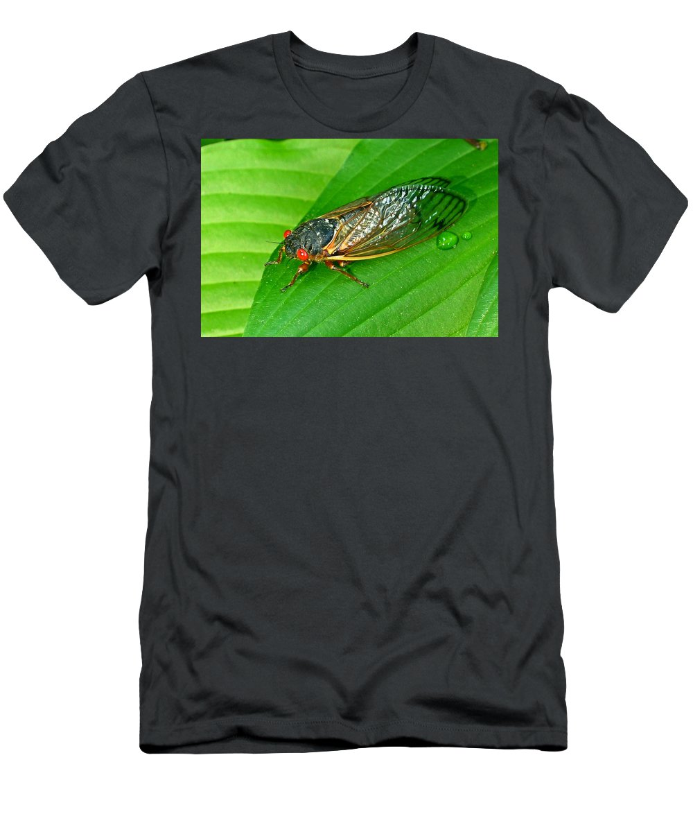 17 Men's T-Shirt (Athletic Fit) featuring the photograph 17 Year Periodical Cicada by Douglas Barnett