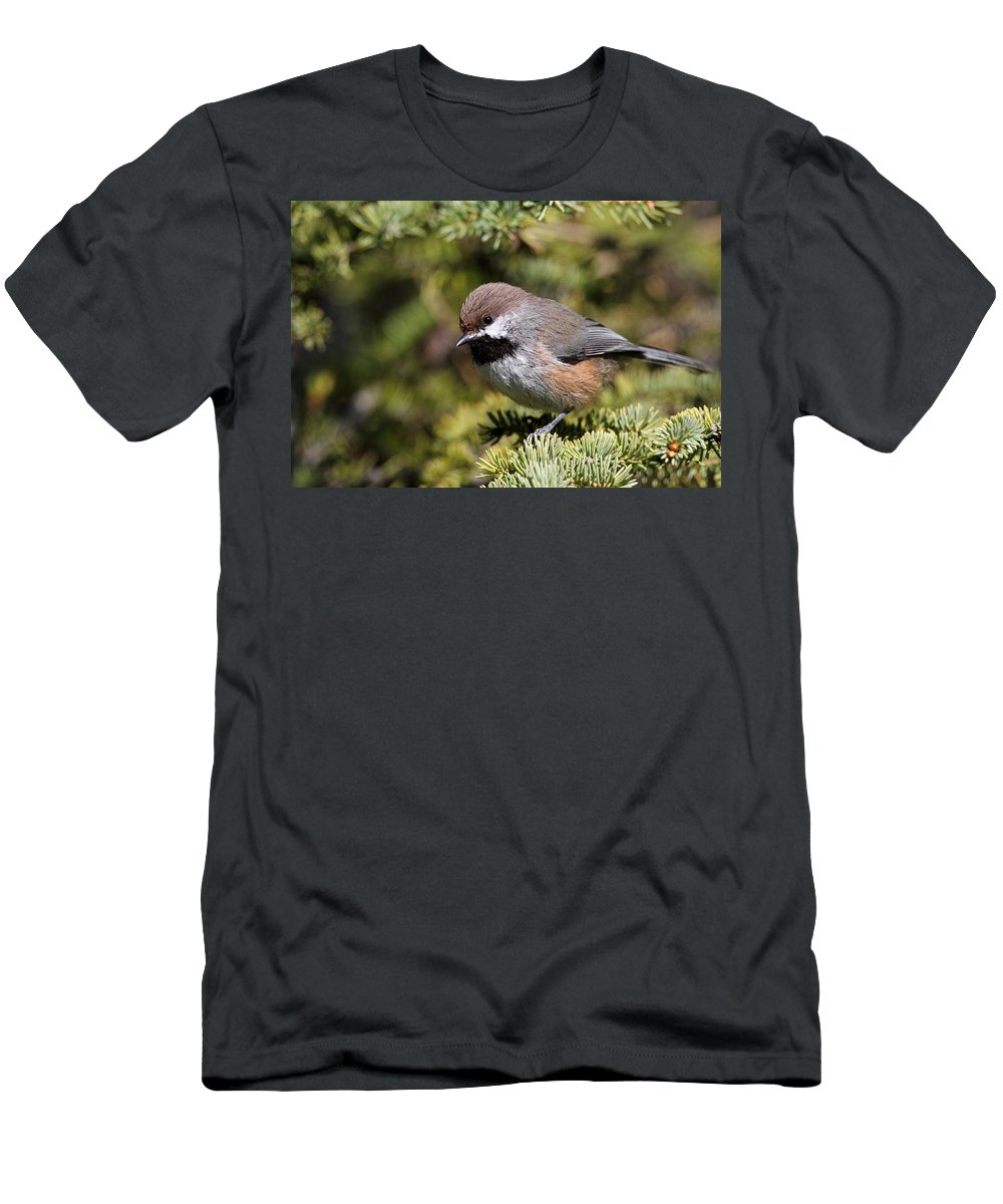 Doug Lloyd Men's T-Shirt (Athletic Fit) featuring the photograph Boreal Chickadee by Doug Lloyd