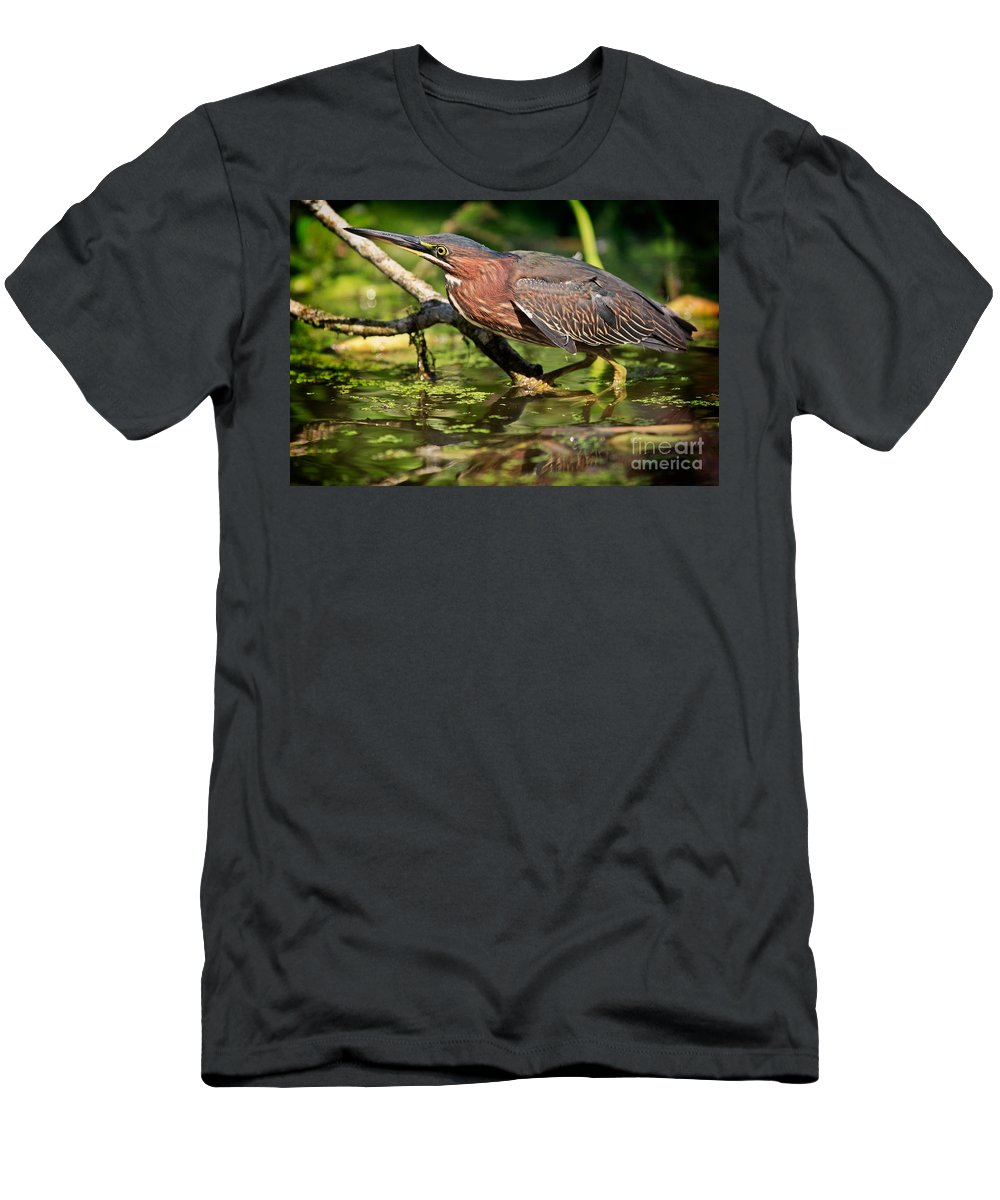 Green Heron Men's T-Shirt (Athletic Fit) featuring the photograph Green Heron by Matt Suess