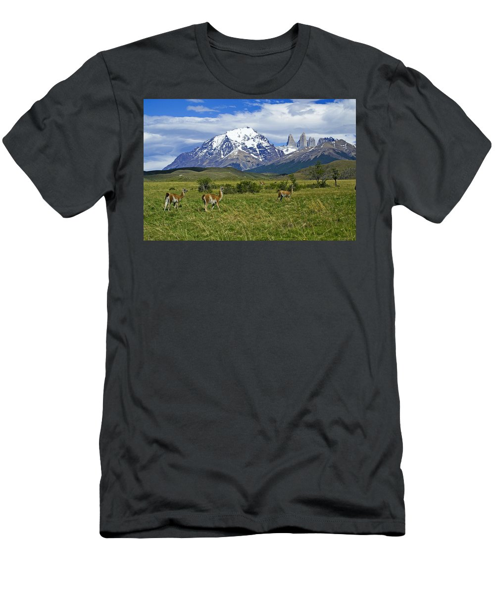 Patagonia T-Shirt featuring the photograph Guanacos in Torres del Paine by Michele Burgess
