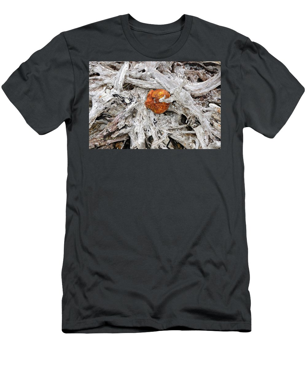 Coconut Men's T-Shirt (Athletic Fit) featuring the photograph A Golden Find by David Lee Thompson