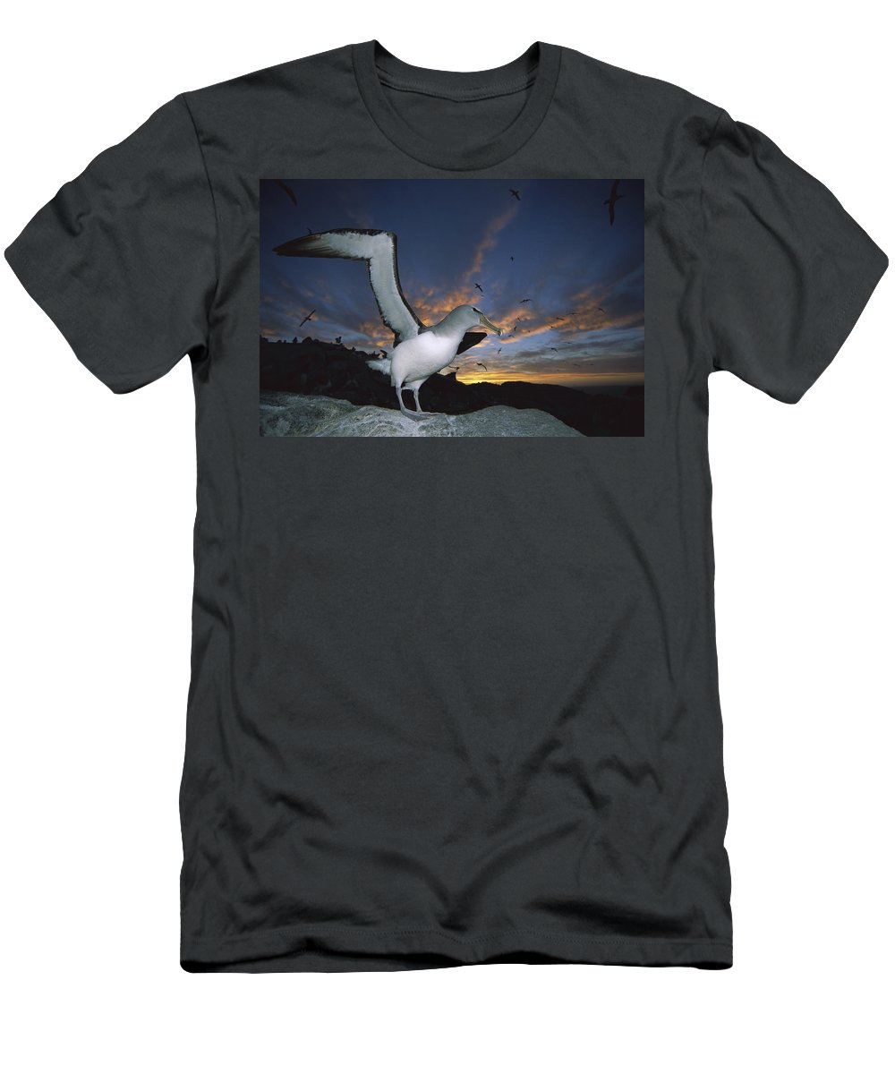00143357 Men's T-Shirt (Athletic Fit) featuring the photograph Salvins Albatross At Sunset by Tui De Roy