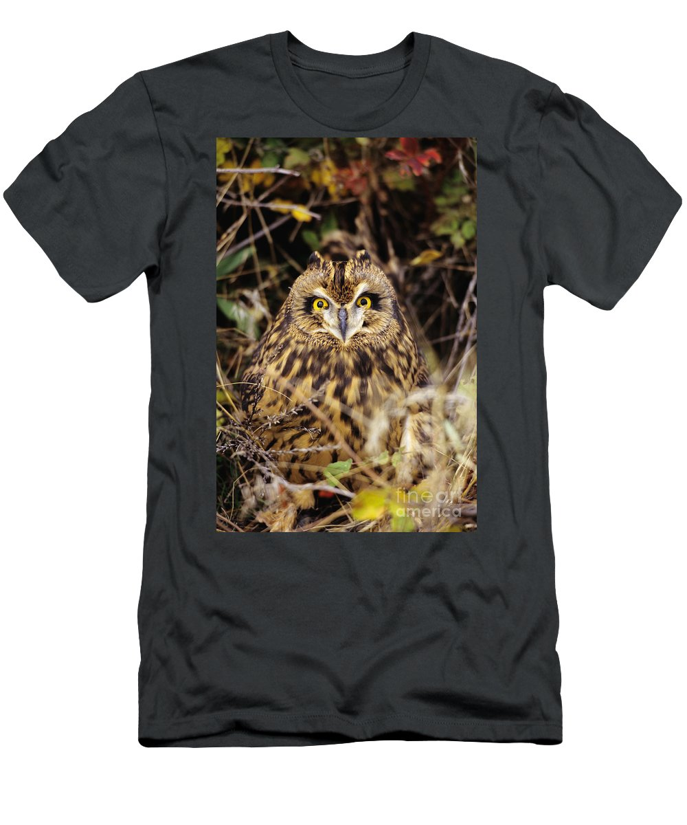 Animal Art Men's T-Shirt (Athletic Fit) featuring the photograph Short-eared Owl by John Hyde - Printscapes
