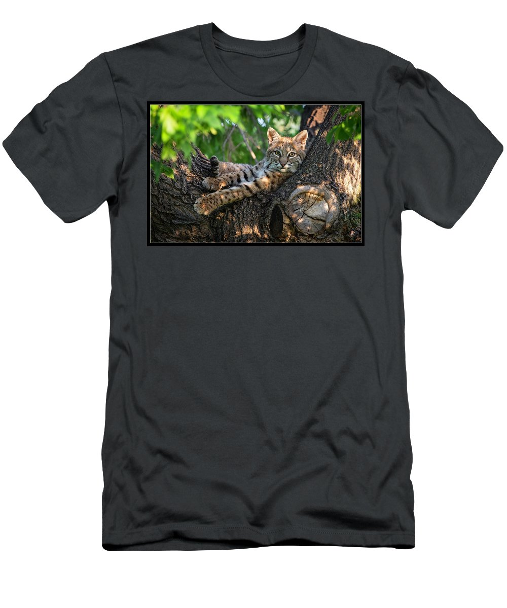 Men's T-Shirt (Athletic Fit) featuring the photograph In A Lurch - Bobcat 8 by J and j Imagery