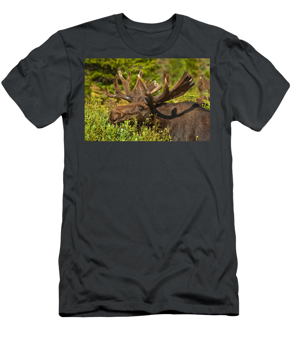 Bull Moose Men's T-Shirt (Athletic Fit) featuring the photograph Moose by Sebastian Musial