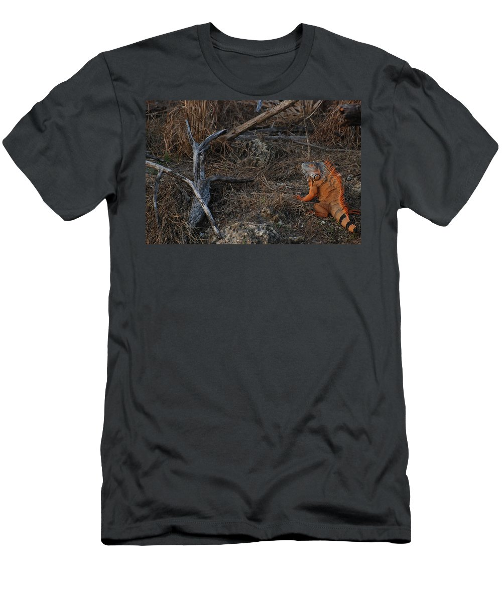 Branches Men's T-Shirt (Athletic Fit) featuring the photograph Orange Iguana by Rob Hans