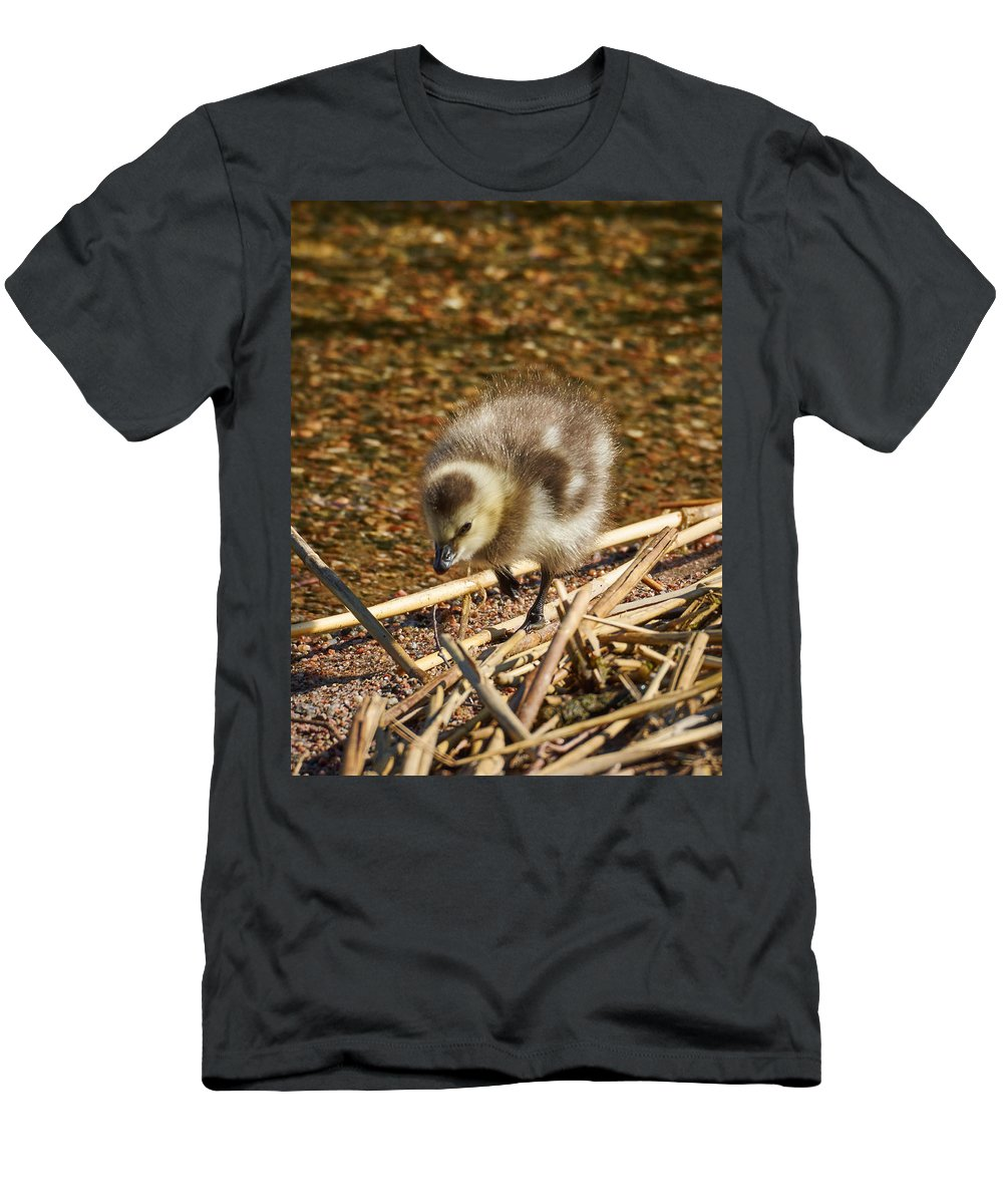 Barnacle Goose Men's T-Shirt (Athletic Fit) featuring the photograph Barnacle Goose by Jouko Lehto