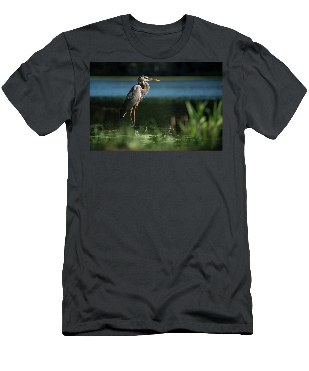 Birds Men's T-Shirt (Athletic Fit) featuring the photograph Great Blue Heron by Gunter Weber
