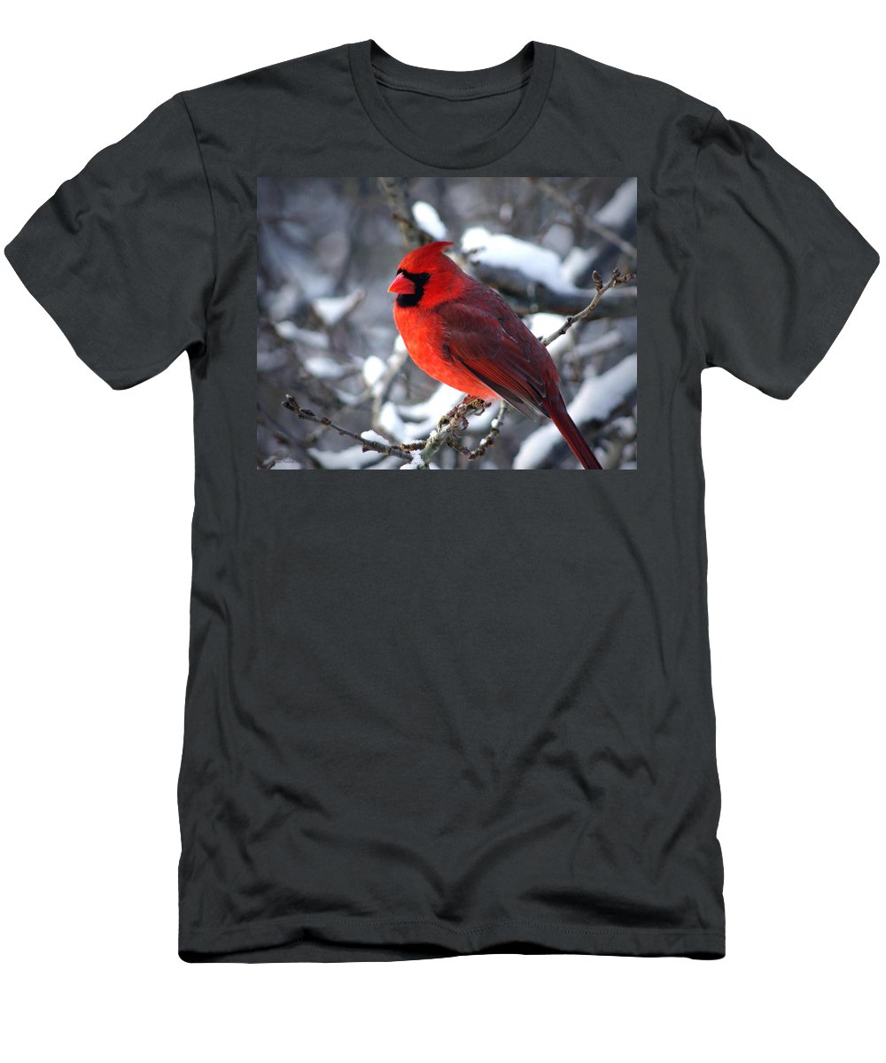 Birds Men's T-Shirt (Athletic Fit) featuring the photograph A Cardinal Day... by Arthur Miller