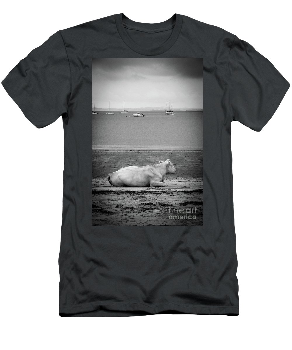 Ireland Men's T-Shirt (Athletic Fit) featuring the photograph A Cow On The Beach by RicardMN Photography