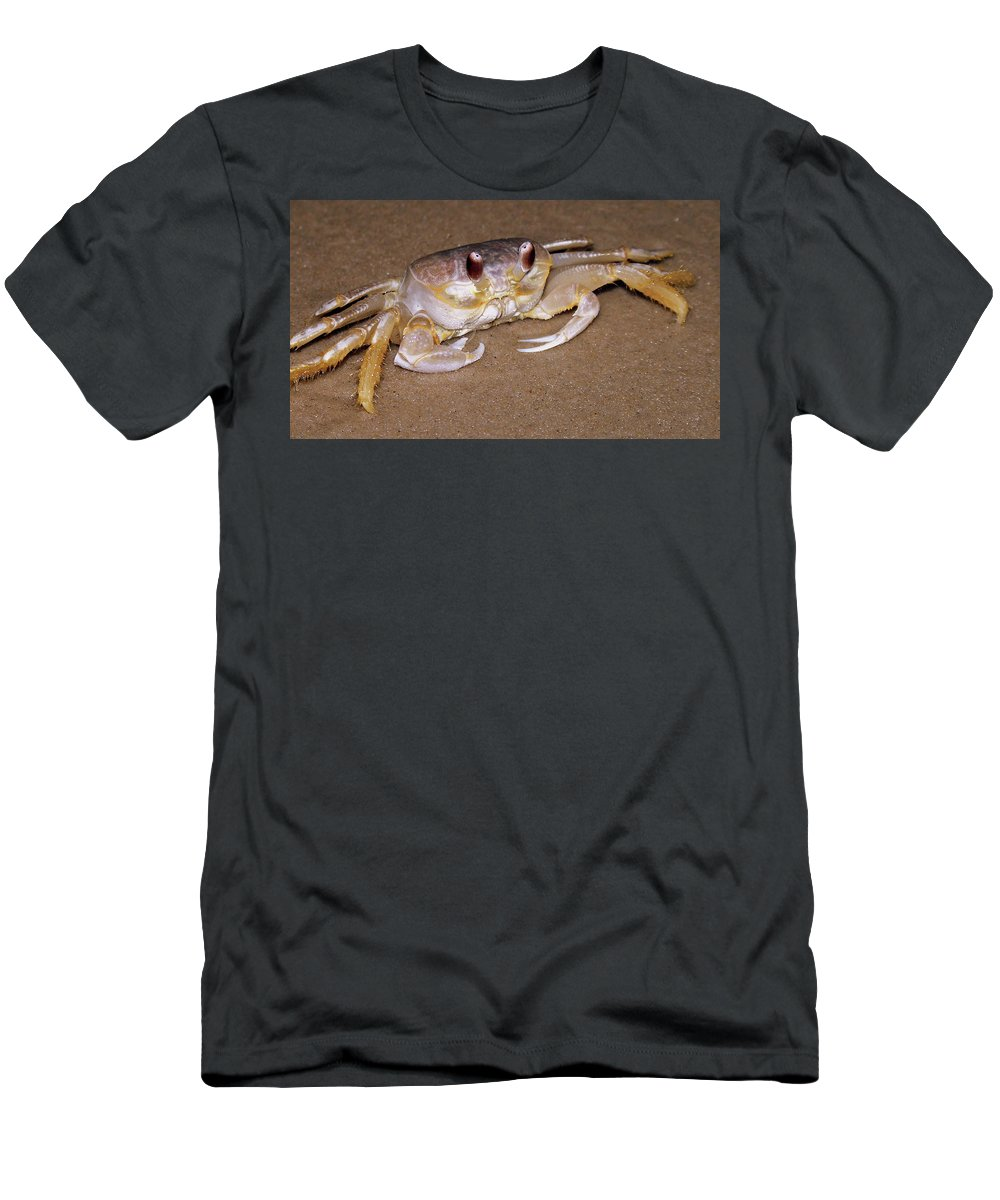 Beach Men's T-Shirt (Athletic Fit) featuring the photograph A Little Crabby by Trish Tritz