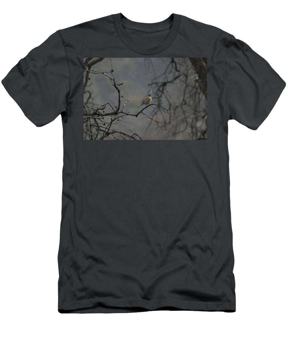 Fowl Men's T-Shirt (Athletic Fit) featuring the photograph A Robin In Spring Snowfall by Jeff Swan