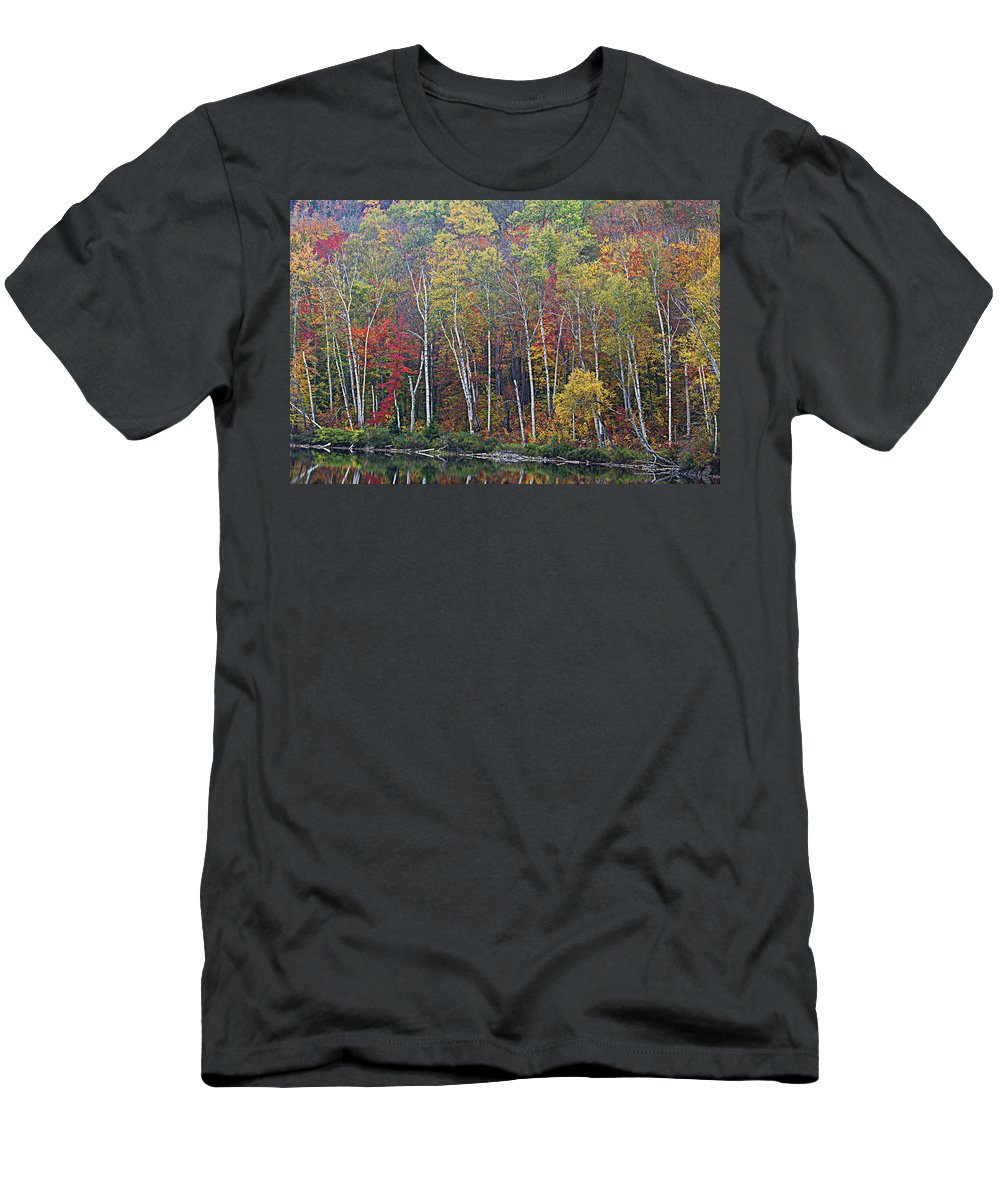 Birch Trees Men's T-Shirt (Athletic Fit) featuring the photograph Adirondack Birch Foliage by Tony Beaver