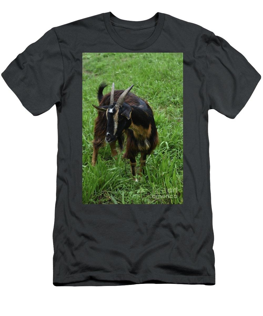 Goat Men's T-Shirt (Athletic Fit) featuring the photograph Adorable Goat In A Field With Thick Green Grass by DejaVu Designs