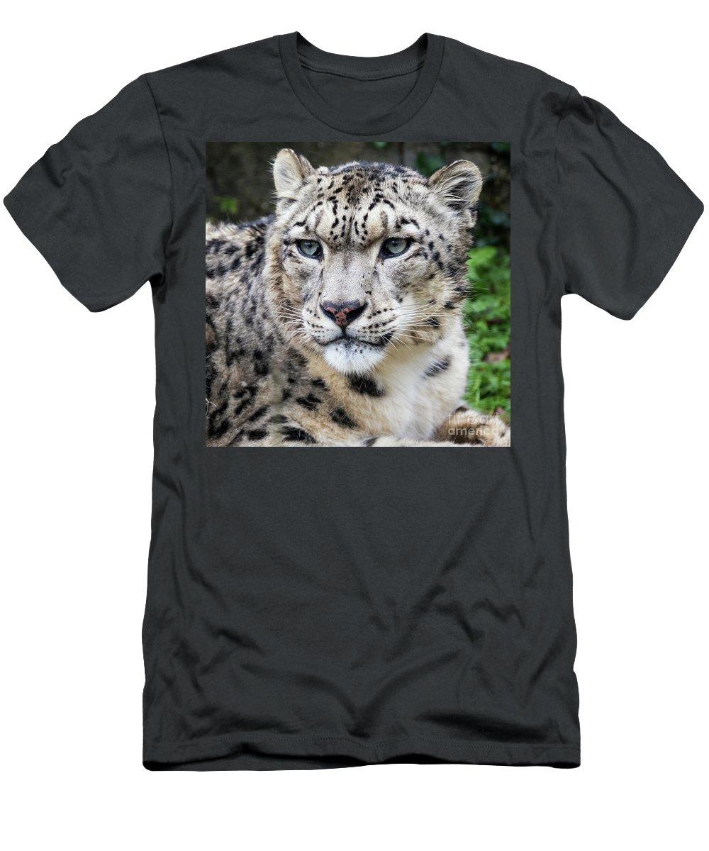 Leopard Men's T-Shirt (Athletic Fit) featuring the photograph Adult Snow Leopard Portrait by Jane Rix