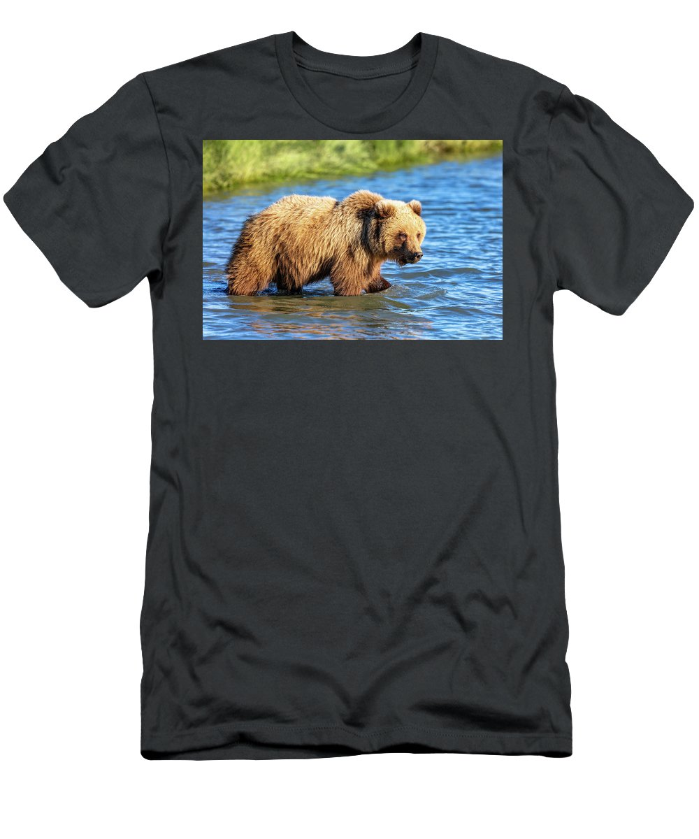 Alaska Men's T-Shirt (Athletic Fit) featuring the photograph Alaska Bear by Mike Centioli