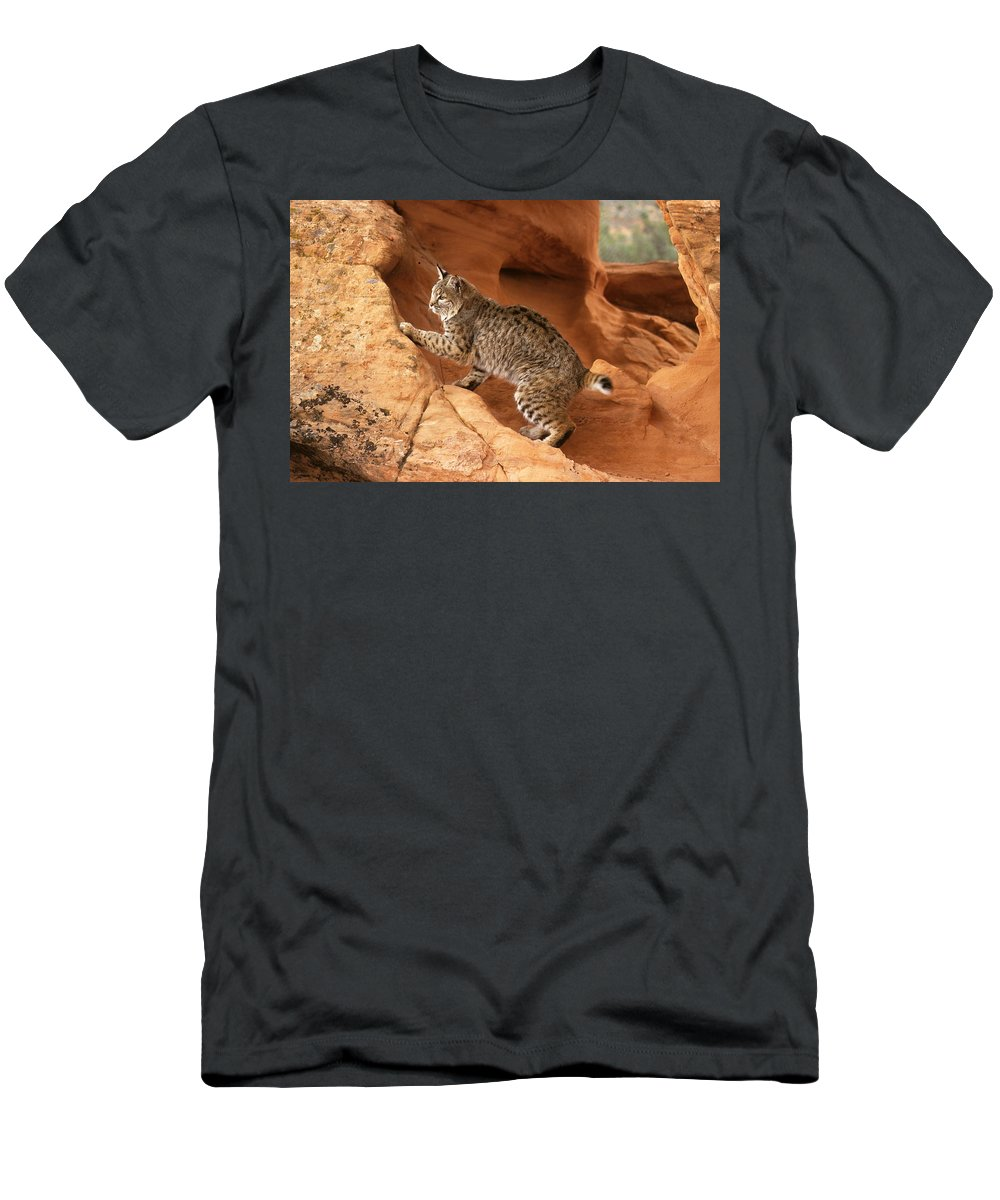 Bobcat Men's T-Shirt (Athletic Fit) featuring the photograph Alert Bobcat by Larry Allan