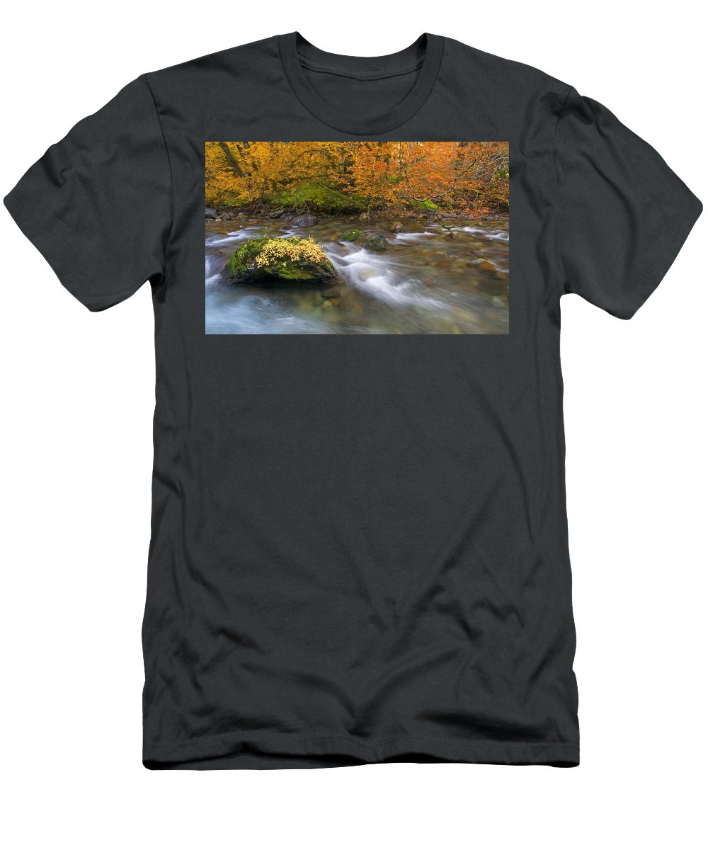 Stream T-Shirt featuring the photograph All that is Gold by Mike Dawson