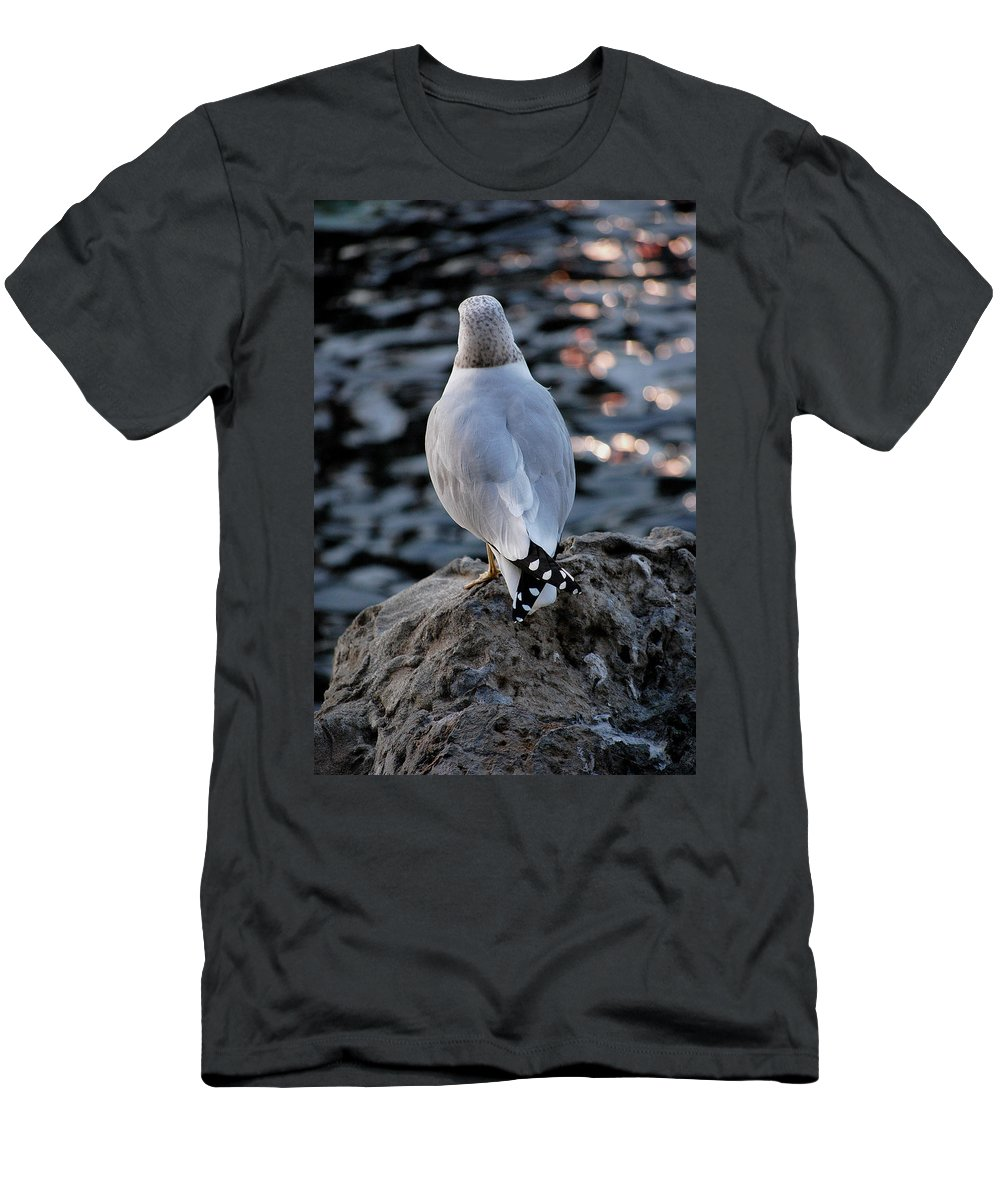 Seagull Men's T-Shirt (Athletic Fit) featuring the photograph Alone by Robert Meanor